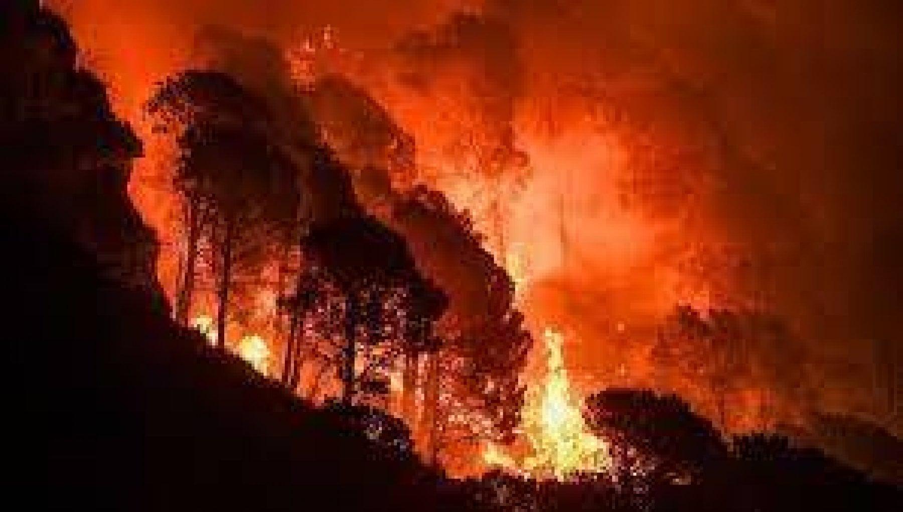"""221640609 e3700473 f8fe 4a0f 951a b73d8920b6f0 - L'Aspromonte assediato dal fuoco """"Salviamo le faggete millenarie"""""""