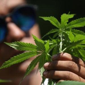 """181014247 3e88065c 9a9a 4b1b 96b4 ea81bb3bf3f2 - Cannabis, intervista a Riccardo Magi: """"Il referendum vola. Un segnale forte alla politica"""""""