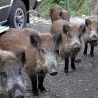 Cinghiali, pesci, cani e storni, il bestiario che anima la campagna elettorale