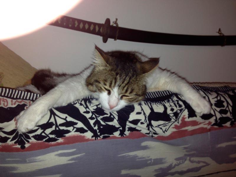 Il mio gatto 9 famiglia repubblica for Il gatto inverno
