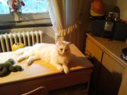 il mio gatto/14