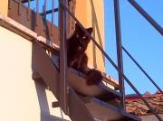 il mio gatto/17