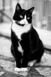 il mio gatto/18