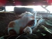 il mio gatto/23