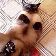 il mio gatto/26