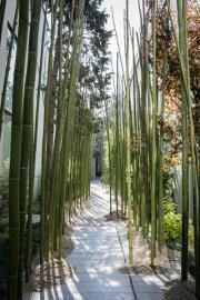 Fuorisalone, nella foresta del design