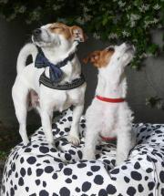 Cani, padroni, frivolezze e un progetto solidale