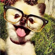 Arriva il #pelfie, il selfie che fanno cani e... gatti