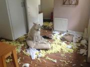 Piccole pesti: cani e gatti che distruggono casa