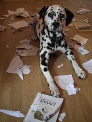 Piccole pesti/2: cani e gatti che distruggono casa