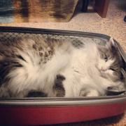 Cielo, c'è un gatto in valigia!