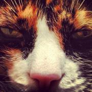 Il selfie perfetto: suggerimenti dal mondo animale
