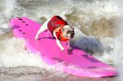 I cani surfisti della California