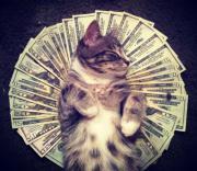 Cashcats: i gatti ricchi di Tumblr