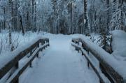 Rovaniemi: viaggio nel paese di Babbo Natale