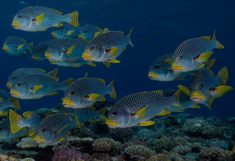 La bellezza celebra la Giornata Mondiale degli Oceani