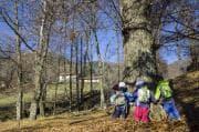 Asili nel bosco: da Nord a Sud Italia, ecco come organizzano giornata e attività dei bambini