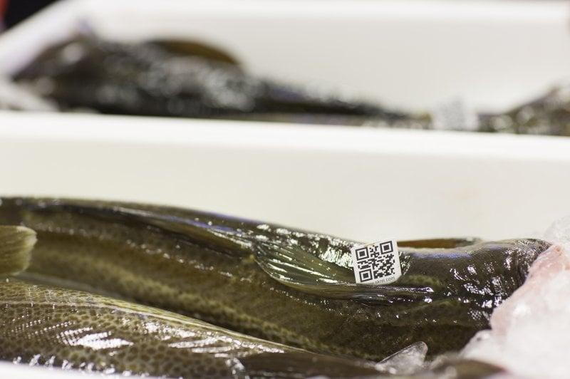 Dal Mare di Barents alle sponde norvegesi il pesce gustoso viaggia per amore