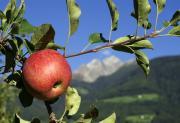 Marzo: le mele del Trentino Alto Adige