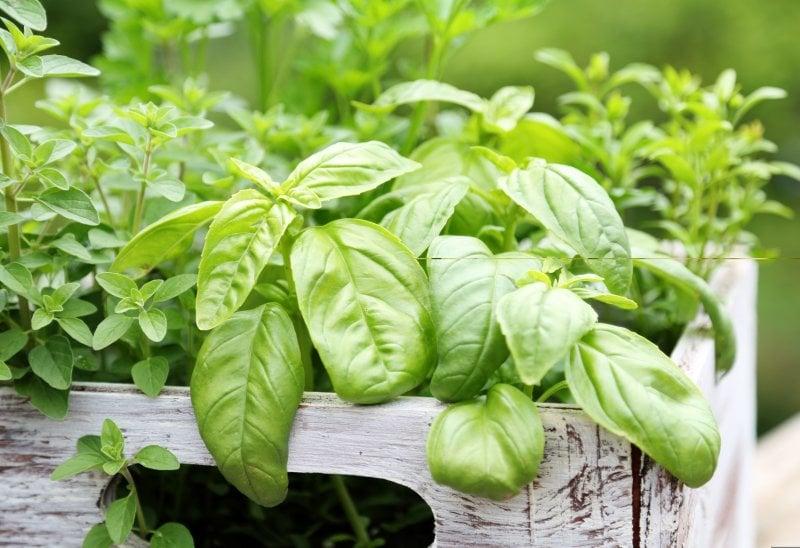 Luglio: Le erbe aromatiche