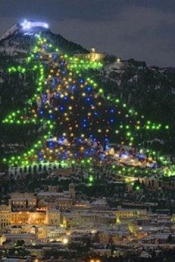 L'albero più grande del mondo è a Gubbio