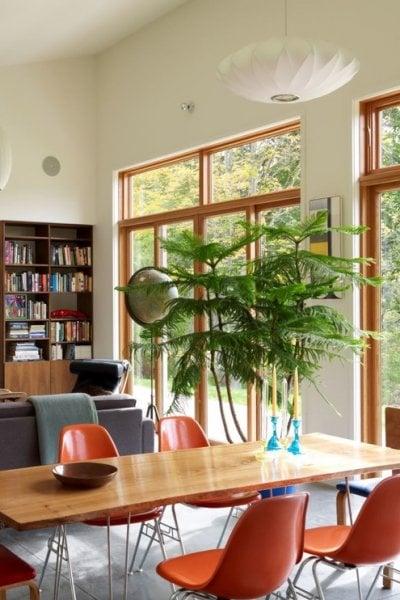 3 bellissimi alberi da appartamento