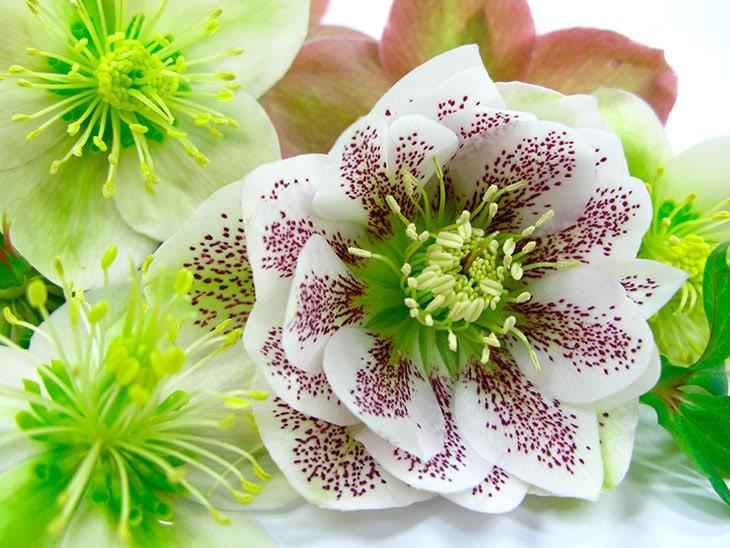 Il significato dei fiori