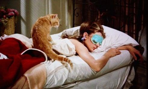 Festa del gatto: 16 film dal 1919 a oggi per festeggiarla davanti alla tv