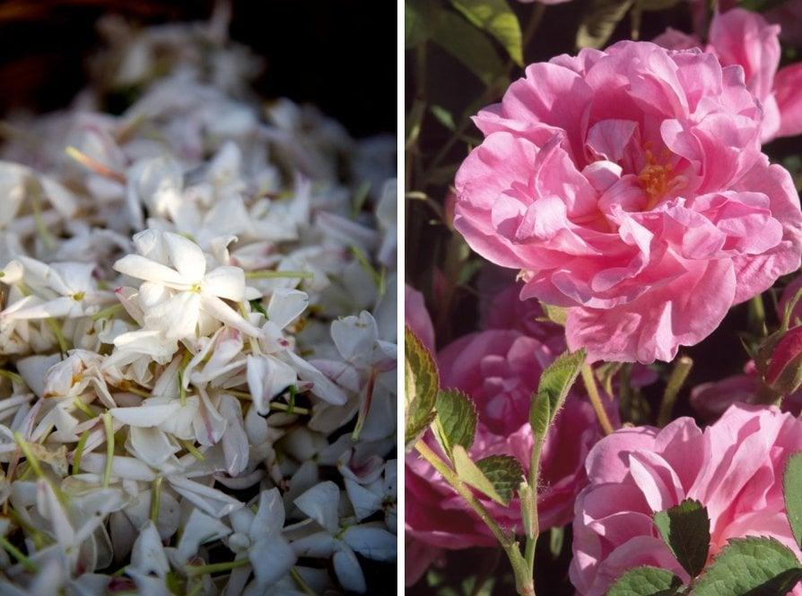 Gelsomino di Grasse e Rosa di Maggio
