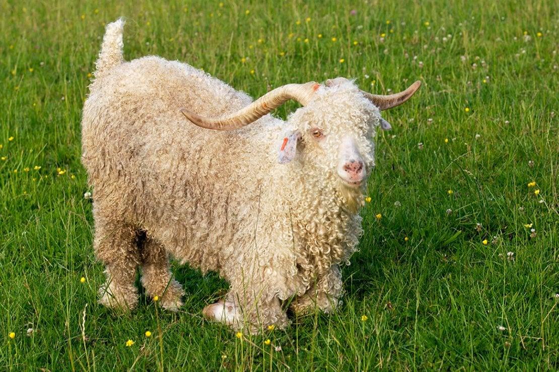 Asos, svolta animalista: al bando piume, seta, cashmere e mohair