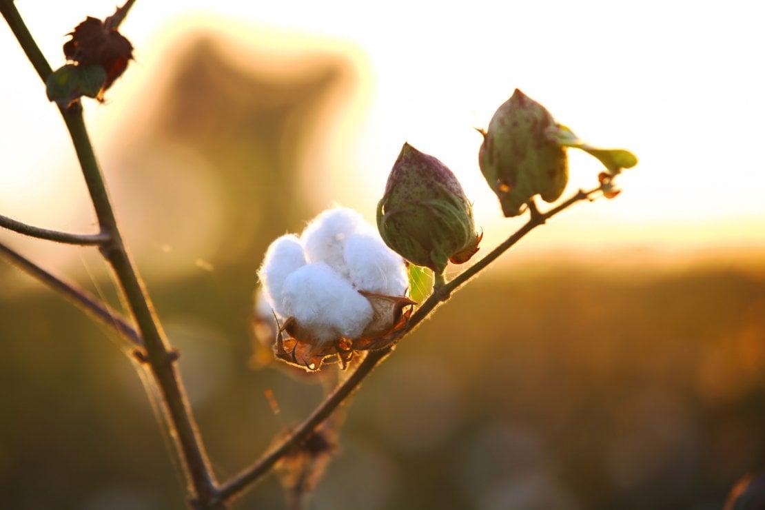 Cotone e nylon bio, ortica e plastica riciclata: così l'abito è veramente sostenibile