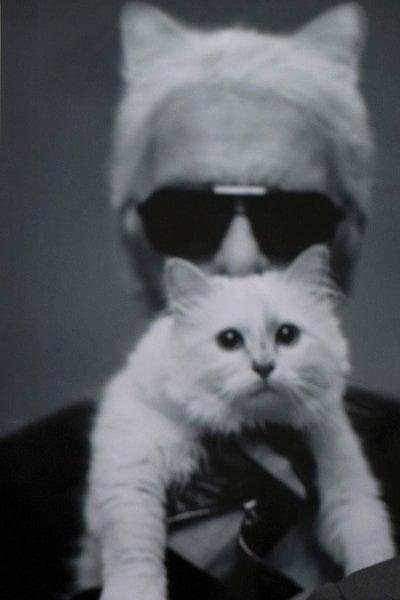 Karl Lagerfeld: Choupette è la mia ereditiera