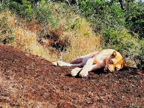 Safari in Sudafrica: le foto eccezionali sono fatte con lo smartphone