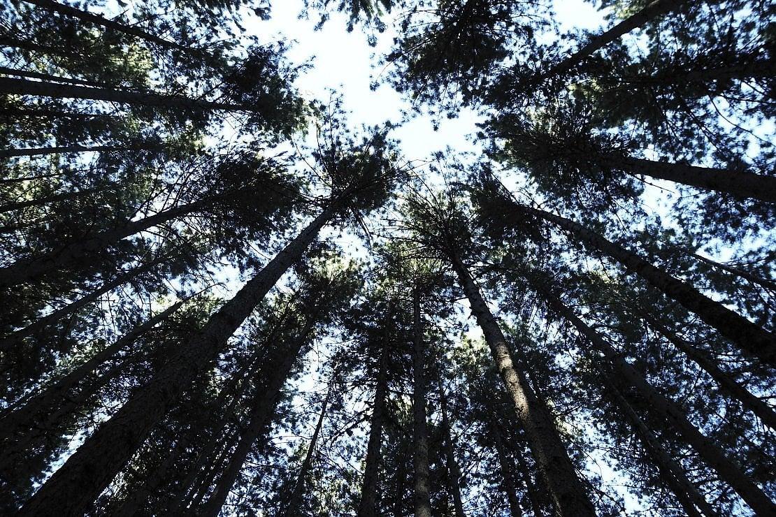 A passeggio tra I Giganti, entriamo nel Parco Nazionale della Sila