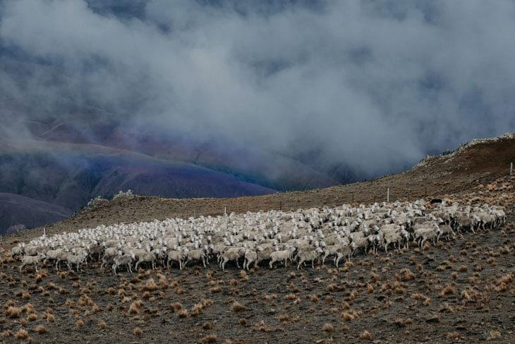 Uno degli allevamenti del Gruppo Reda in Nuova ZelandaCourtesy Rewoolution