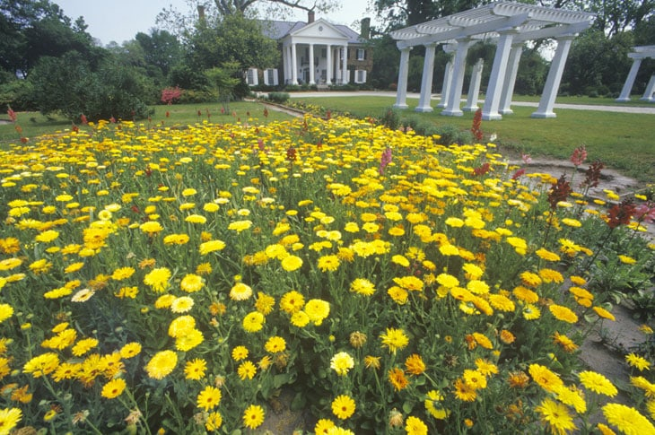 La Boone Hall, ex piantagione in South Carolina dove si sono sposati Ryan Reynolds e Blake Lively
