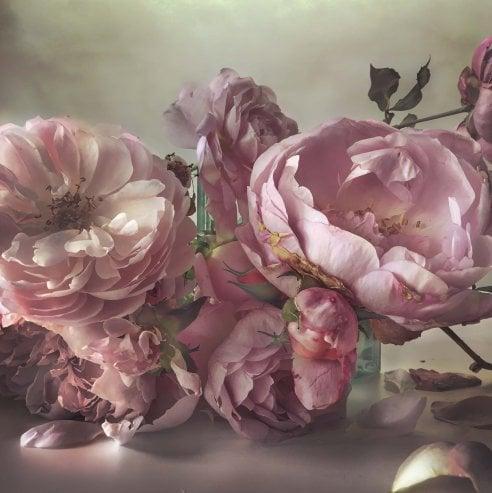Nel giardino di Nick Knight: le rose immortalate dal fotografo sembrano quadri seicenteschi