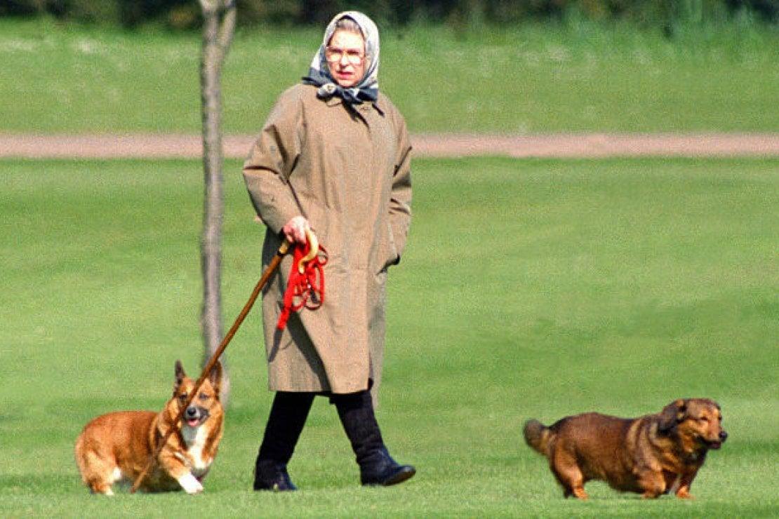 La regina Elisabetta II a passeggio con alcuni dei suoi cani a Windsor Castle