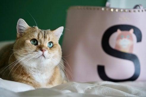 Valentino Garavani: ecco la Rockstud Pet, personalizzata con il volto del tuo animale