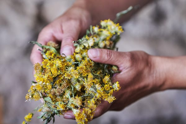 Solidago e Anthyllis