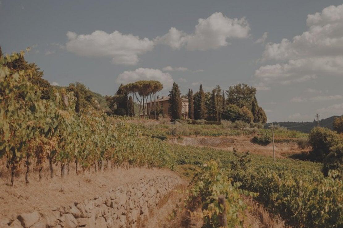 Vigneti terrazzati di memoria romana Lamole di Lamole a Greve in Chianti.
