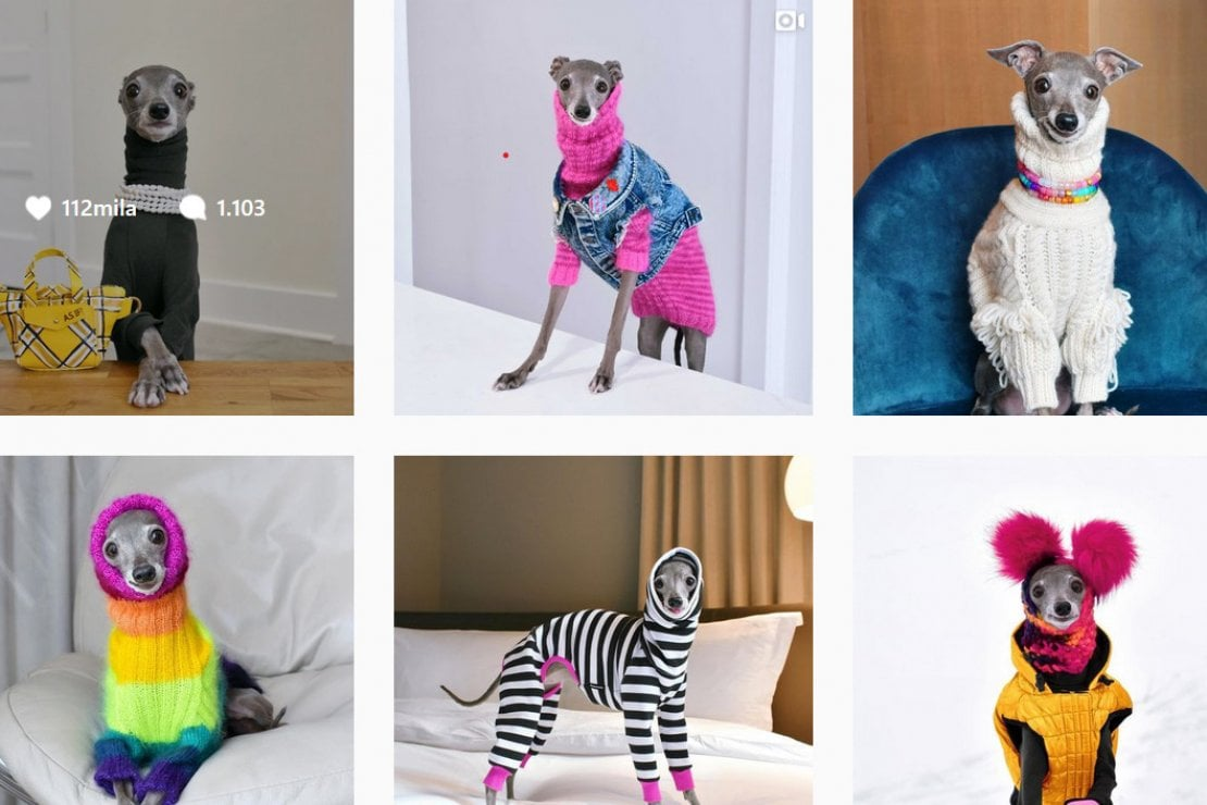 Tutti pazzi per Tika the Iggy, il cane fashion victim da un milione di followers