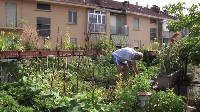 Reporter torino un giardino sul tetto repubblica tv - Giardino sul tetto ...