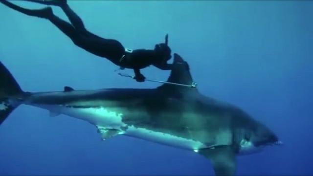 kimi, la ragazza che nuota con gli squali - repubblica tv - la