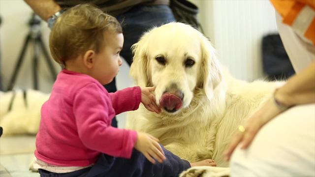 Risultati immagini per pet therapy prelievi