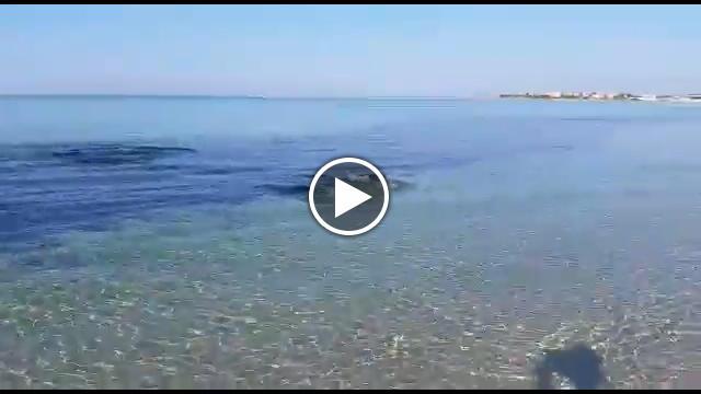 Salento lo squalo insegue un branzino sulla riva a punta for Casa design com