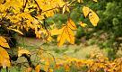 """RepTv News, Casciaro: siate cercatori di foglie nell'""""autunno perfetto"""""""