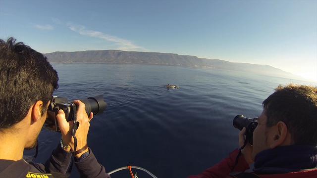 Lo studio del linguaggio dei delfini ad Alghero