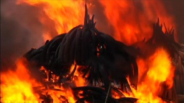 Kenya, falò contro il bracconaggio: bruciate 150 tonnelate d'avorio