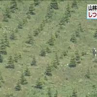 Giappone, bimbo disperso nel bosco: lasciato solo dai genitori per 'punizione'